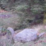 Stone swan