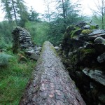 Taking a wall for a walk - and a tree for a fall